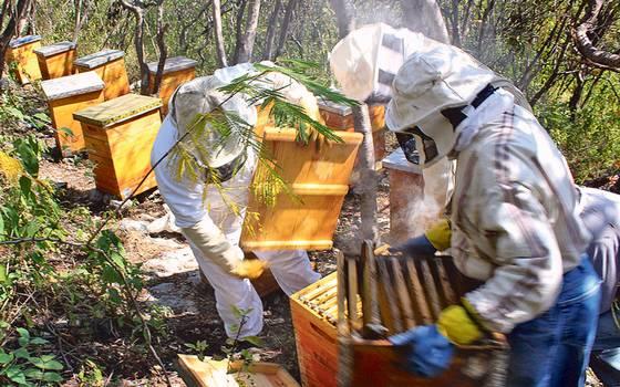El Cambio Climático acaba con la miel 16
