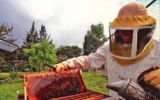 El Cambio Climático acaba con la miel 15