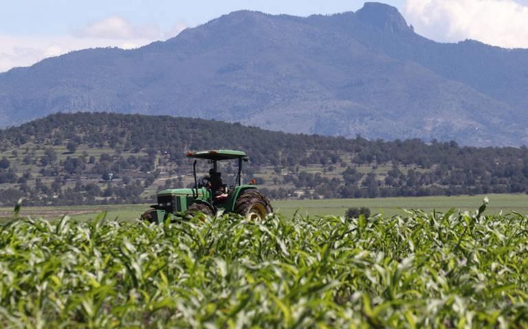 El uso de transgénicos es una poderosa herramienta para lidiar con una amplia gama de problemas que aquejan a la agricultura.