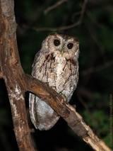 Especialistas en taxonómicos del Centro de Investigación en Biodiversidad y Conservación de la UAEM participaron en dicho listado.