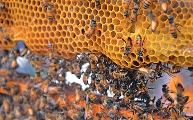 El Cambio Climático acaba con la miel 14