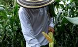 Pese a que en México están prohibidos, se importan en productos que cotidianamente consumimos.
